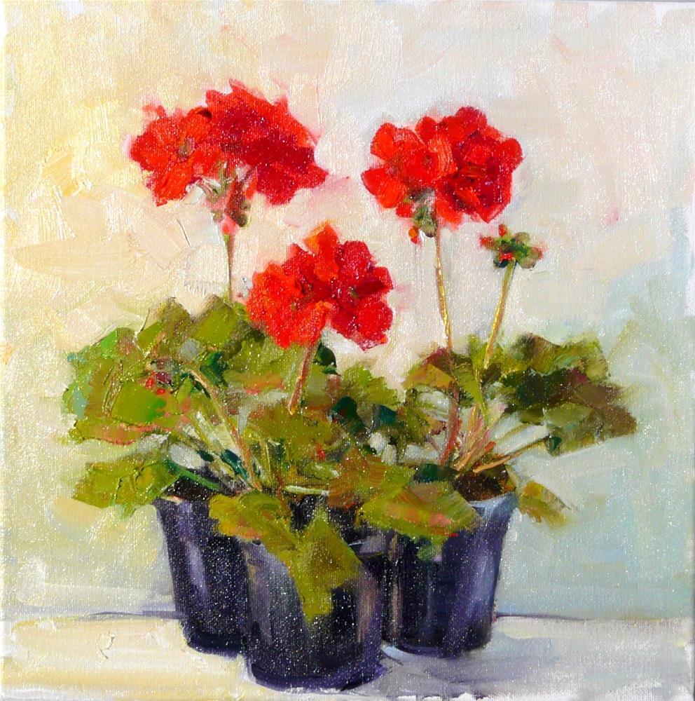 """Three Geranium Pots,still life,oil on canvas,12x12,price$400"" original fine art by Joy Olney"
