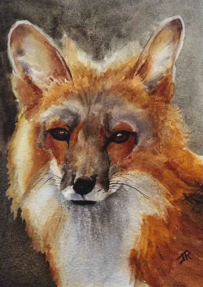 """Red Fox"" original fine art by June Rollins"