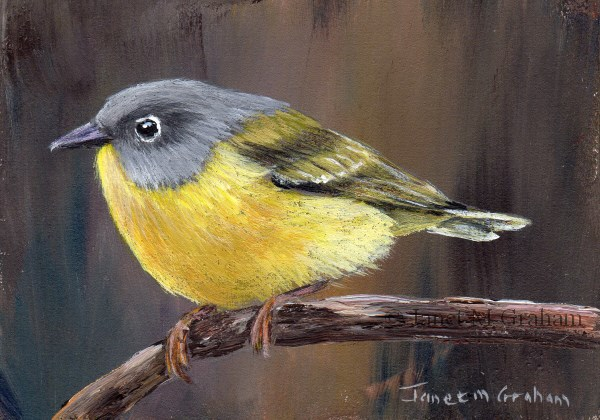 """Nashville Warbler ACEO"" original fine art by Janet Graham"