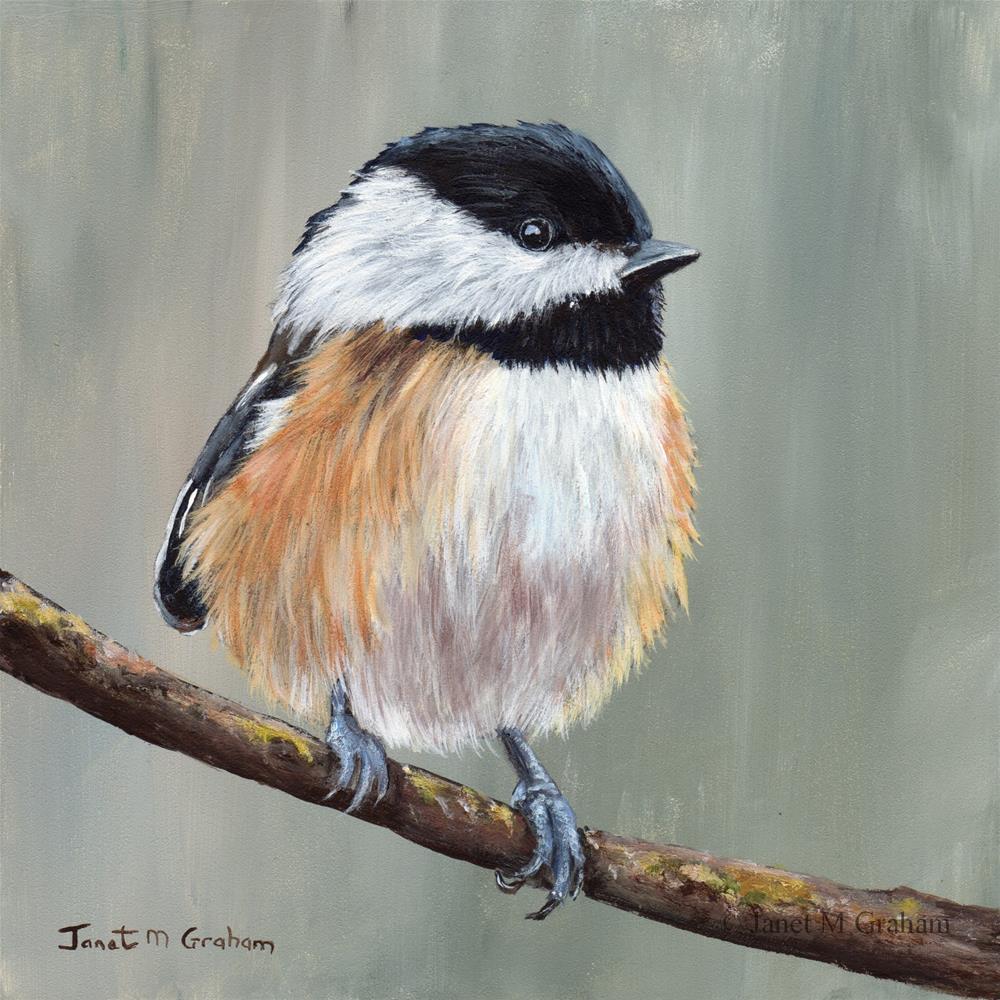 """Black Capped Chickadee"" original fine art by Janet Graham"