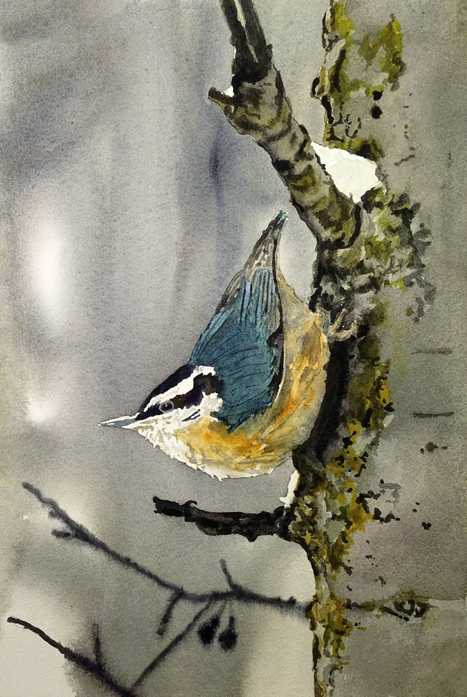 """""""N is for Nuthatch"""" original fine art by Andy Sewell"""