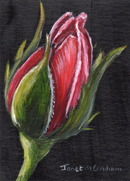 """Rose Bud ACEO"" original fine art by Janet Graham"