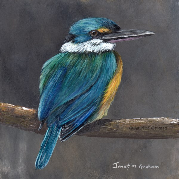 """Sacred Kingfisher No 2"" original fine art by Janet Graham"