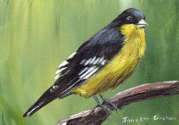 """Lesser Goldfinch ACEO"" original fine art by Janet Graham"
