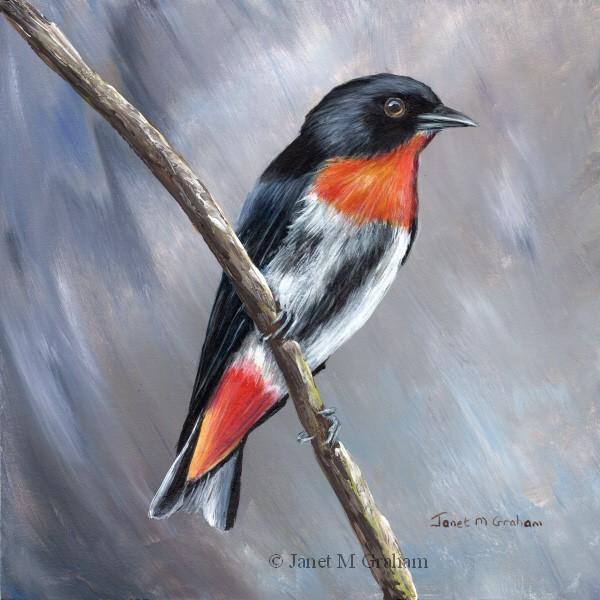 """Mistletoebird"" original fine art by Janet Graham"