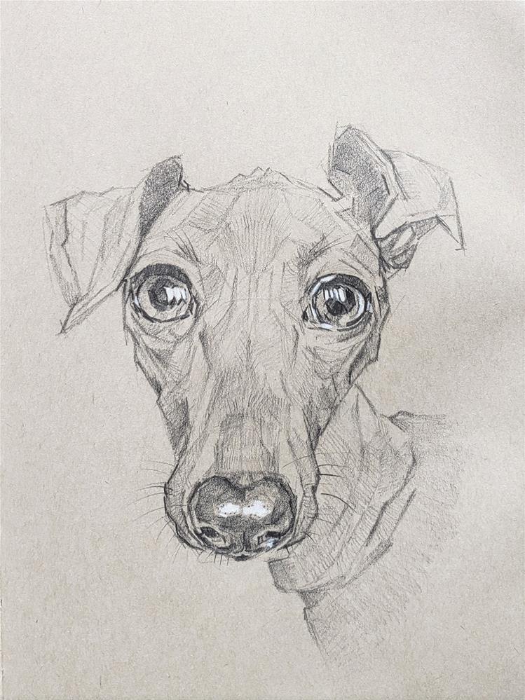 """Grey - Portrait of Italian Greyhound"" original fine art by Bhavna Misra"