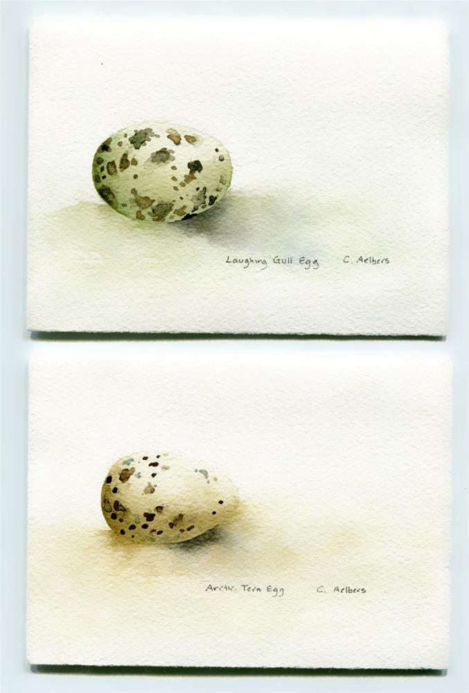 """Arctic Tern Egg and Laughing Gull Egg"" original fine art by Corinne Aelbers"