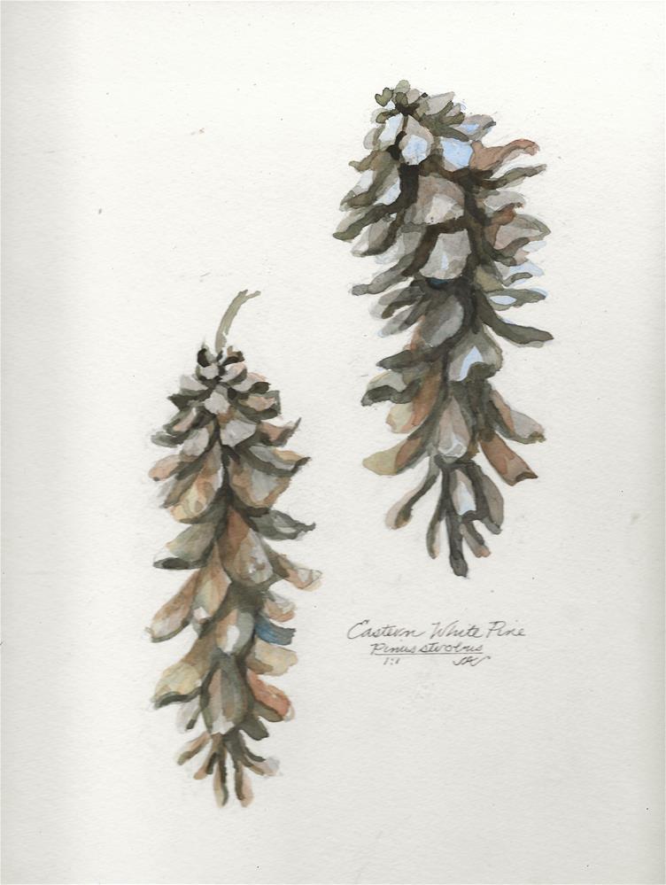 """Eastern White Pine Cone - Pinus strobus"" original fine art by Jean Krueger"