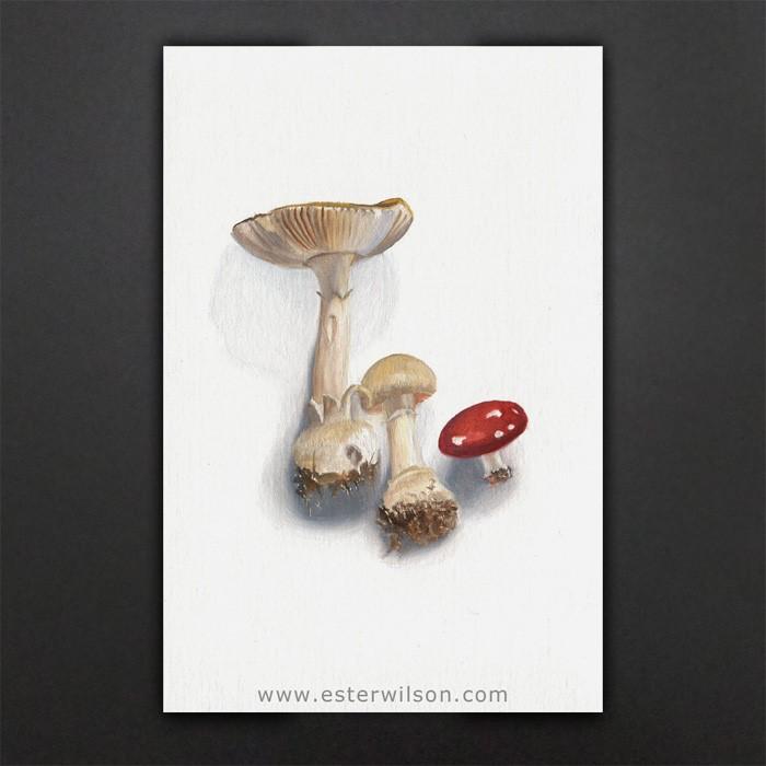 """Mushrooms"" original fine art by Ester Wilson"