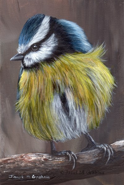 """Blue Tit No 6"" original fine art by Janet Graham"