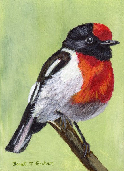 """Red Capped Robin 2 ACEO"" original fine art by Janet Graham"