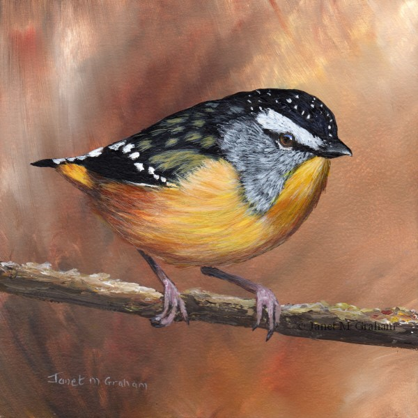 """Spotted Pardalote"" original fine art by Janet Graham"