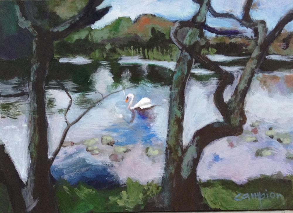 """Swan Song"" original fine art by Diane Campion"