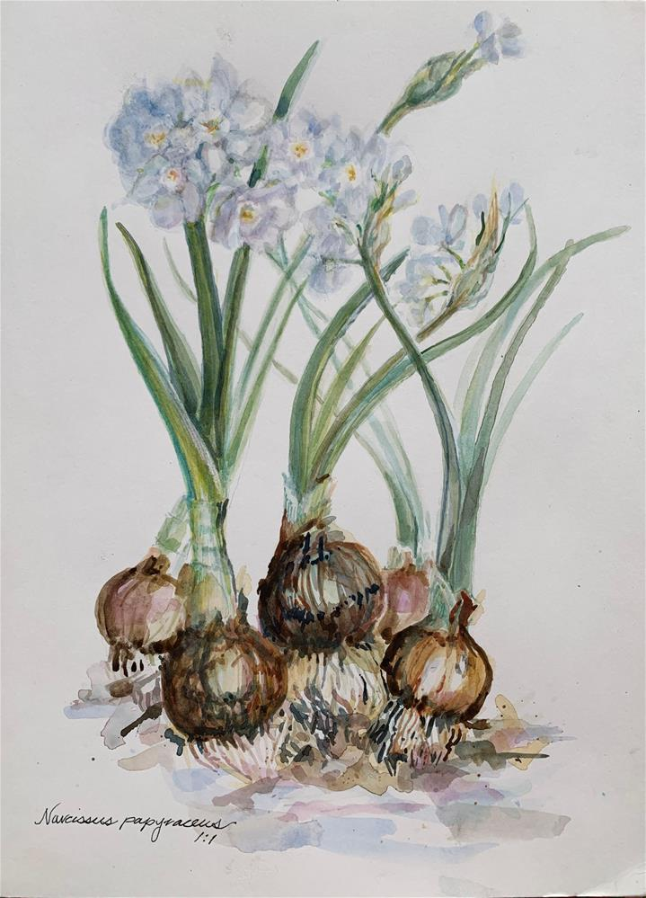 """Narcissus papyraceus - Paper Whites"" original fine art by Jean Krueger"