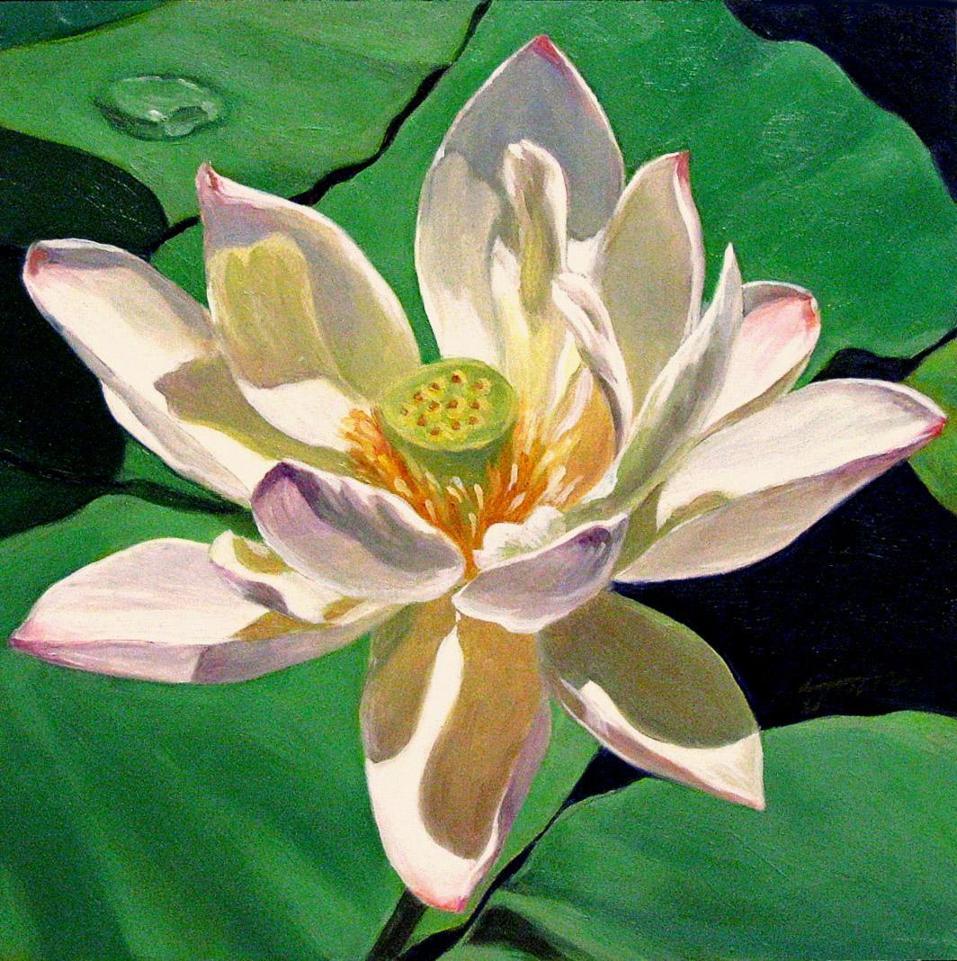"""White Water Lily"" original fine art by Joanna Bingham"