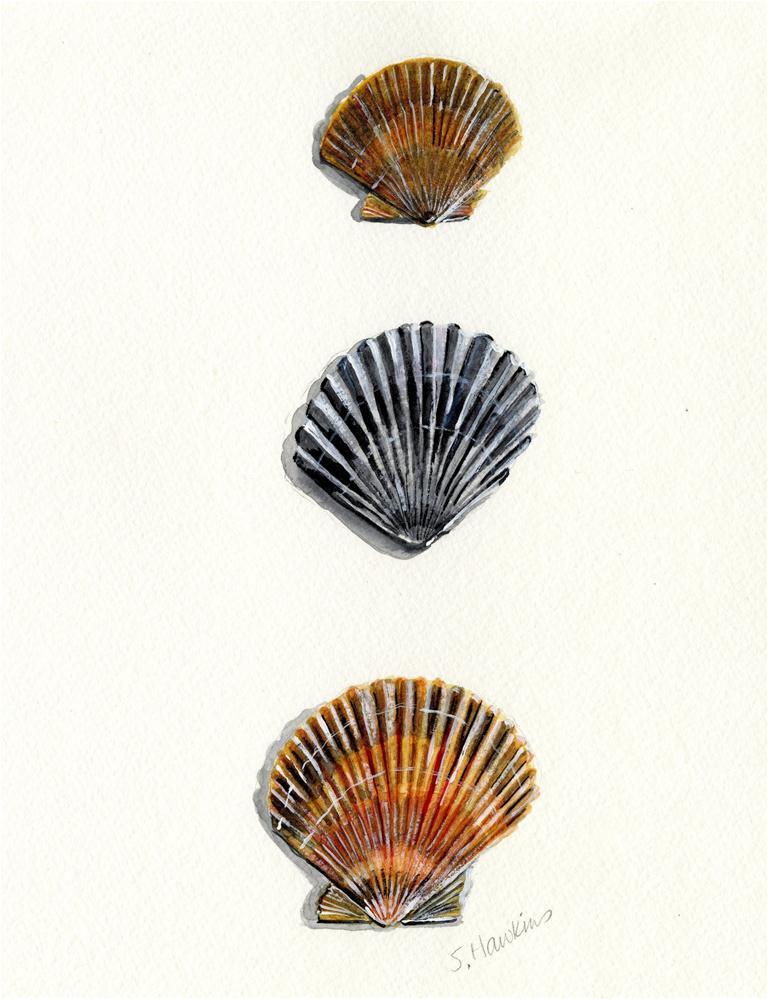 """Scallop Shell Trio"" original fine art by Sheryl Heatherly Hawkins"