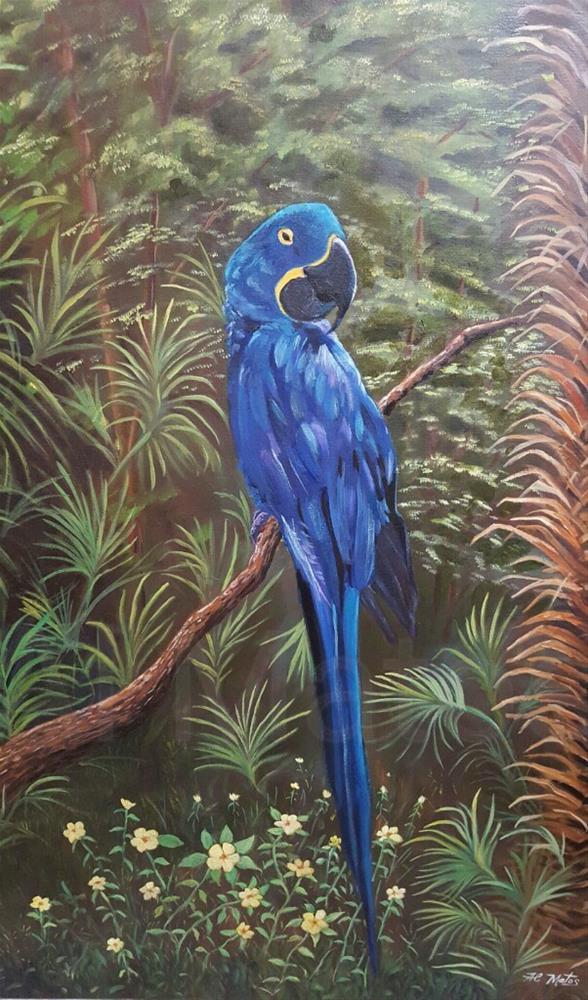 """""""Hyacinth Macaw """" original fine art by Al Matos"""