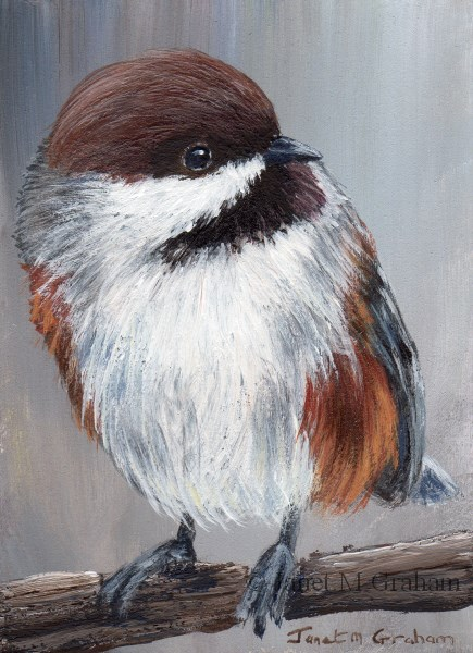 """Boreal Chickadee ACEO"" original fine art by Janet Graham"