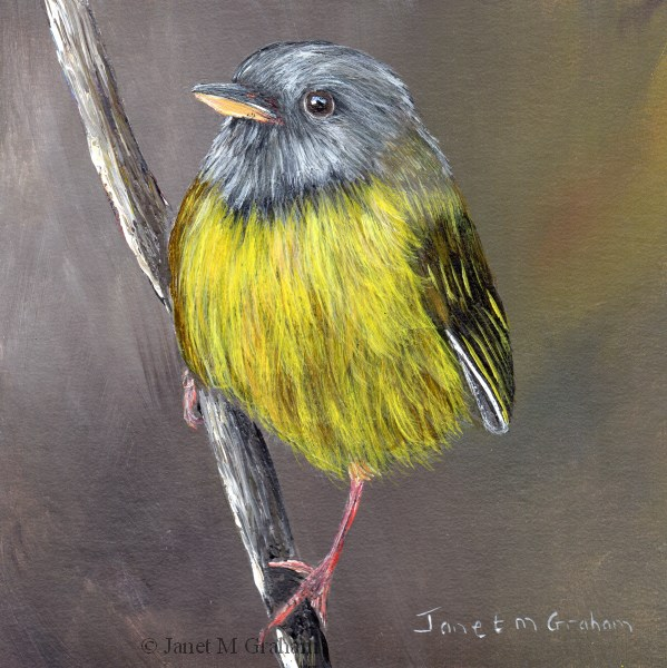 """Mourning Warbler"" original fine art by Janet Graham"