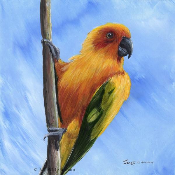 """""""Sun Parakeet"""" original fine art by Janet Graham"""