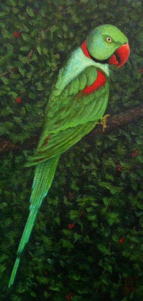 """""""Indian Ringneck Parrot"""" original fine art by Elizabeth Elgin"""