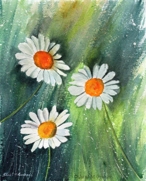 """Daisies"" original fine art by Janet Graham"