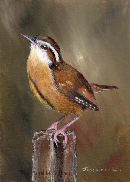 """Wren No 3"" original fine art by Janet Graham"