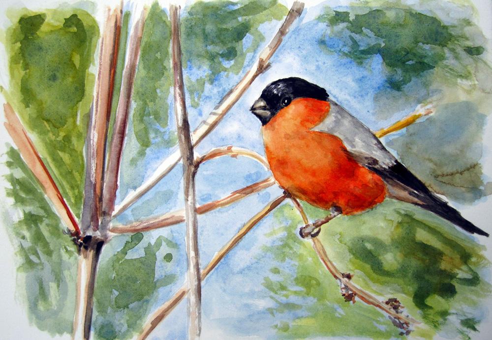 """""""Bullfinch"""" original fine art by Ulrike Miesen-Schuermann"""