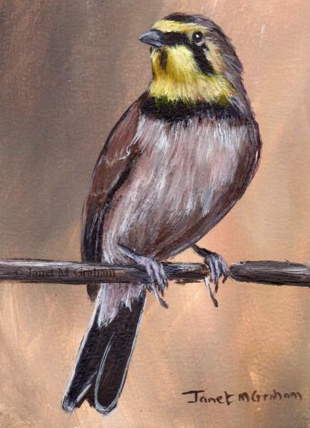 """""""Horned Lark ACEO"""" original fine art by Janet Graham"""