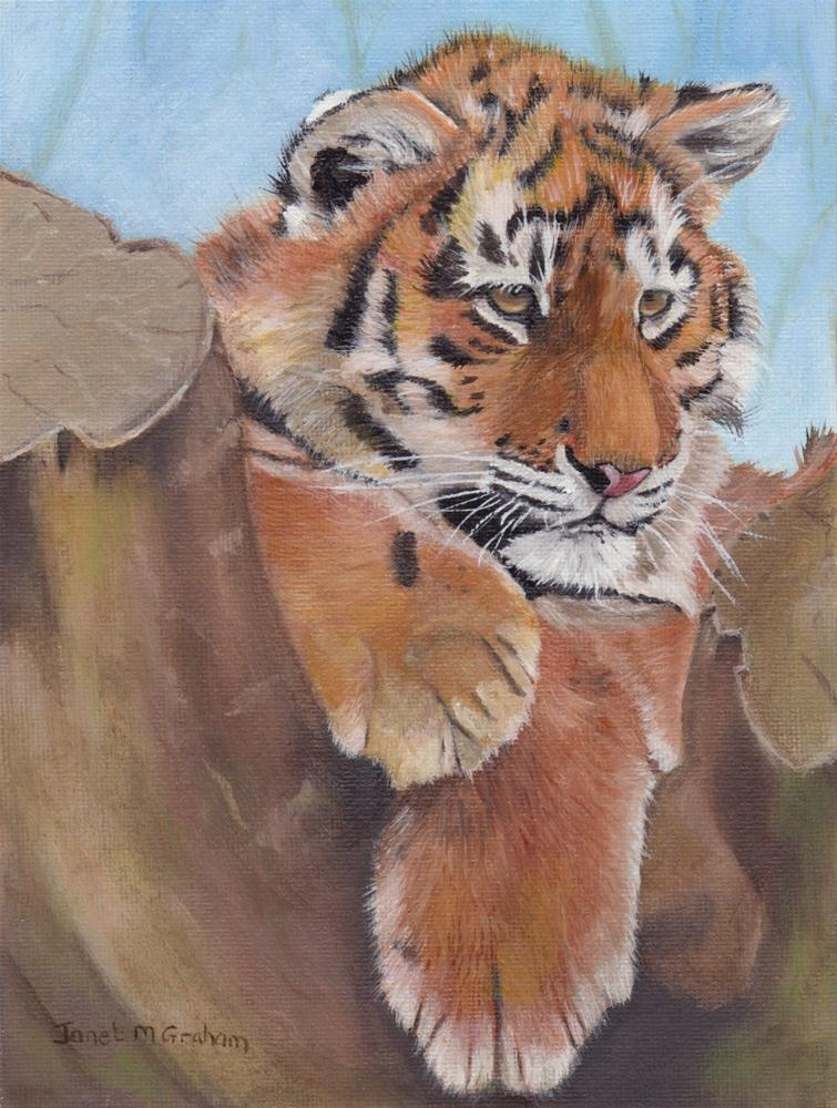 """Tiger Cub"" original fine art by Janet Graham"