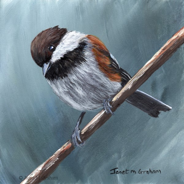 """Chestnut Backed Chickadee No 4"" original fine art by Janet Graham"