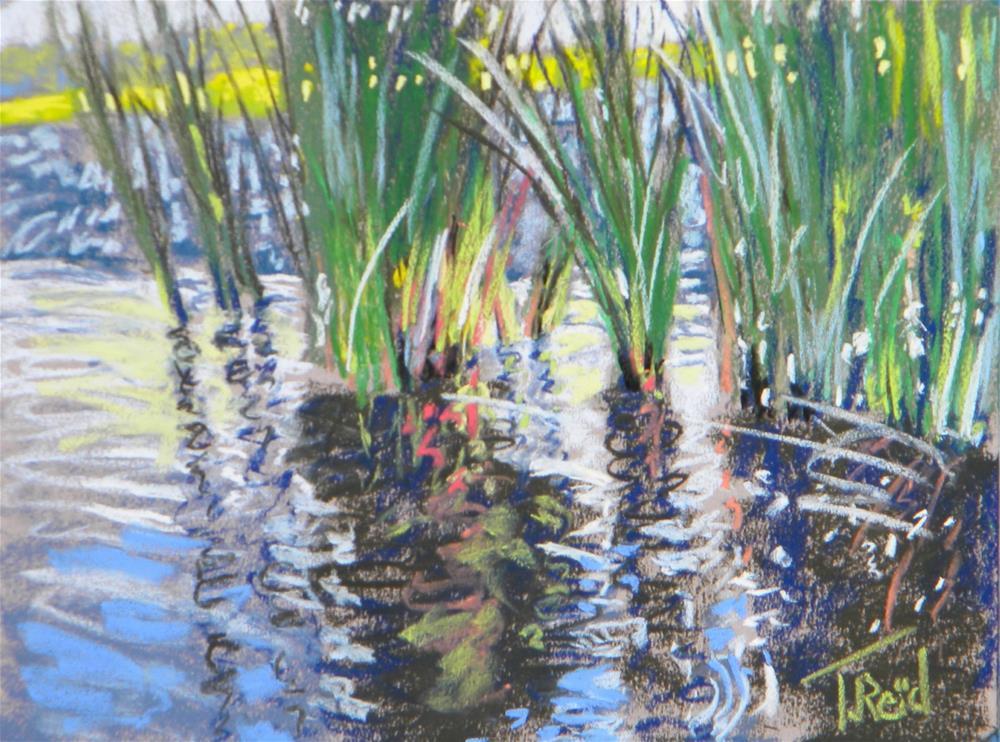 """Reeds and water"" original fine art by Toby Reid"