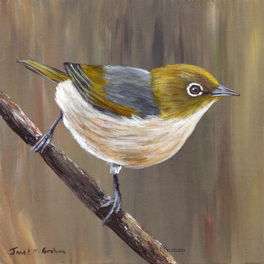 """Silvereye No 2"" original fine art by Janet Graham"