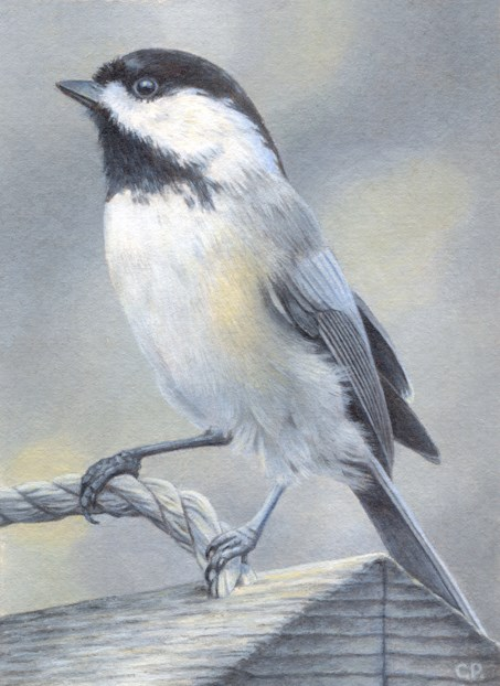 """Chickadee"" original fine art by Cheryl Plautz"