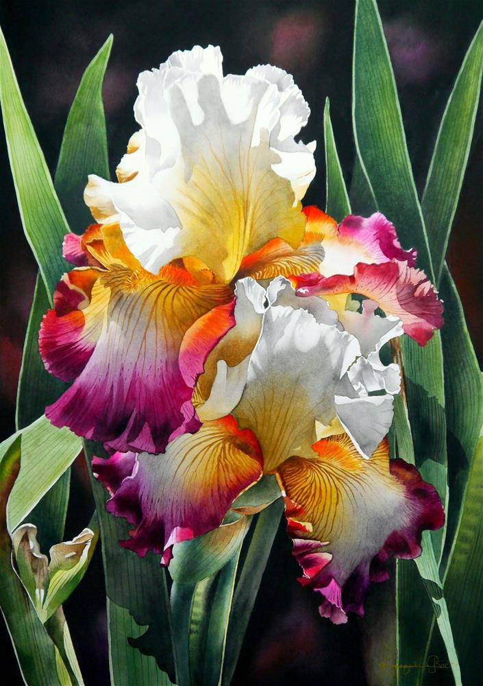 """Tri-Colored Irises"" original fine art by Jacqueline Gnott, TWSA, WHS"
