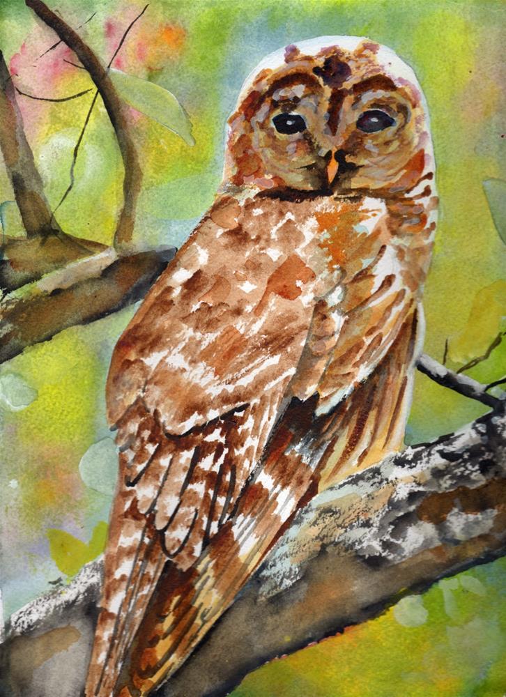 """""""Barred owl"""" original fine art by Bunny Griffeth"""