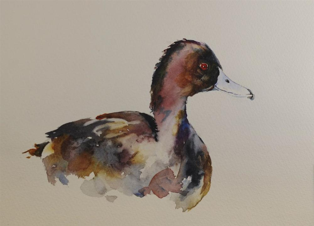 """Red Headed Duck"" original fine art by Sue Churchgrant"