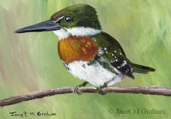 """Green Kingfisher ACEO"" original fine art by Janet Graham"
