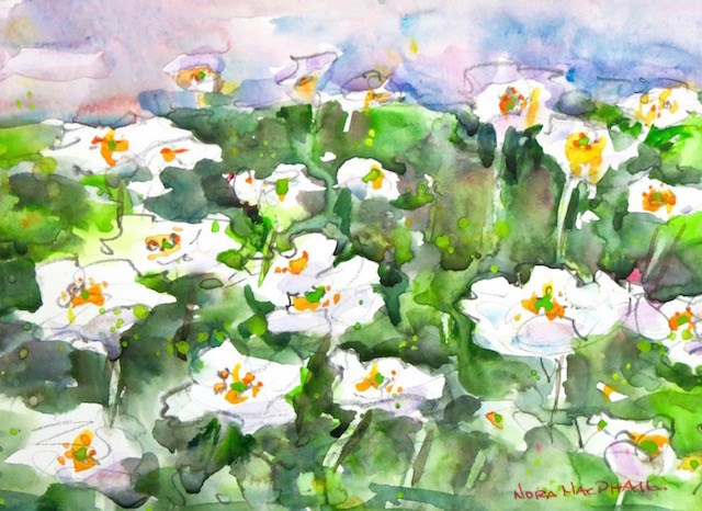 """Mountain Avens"" original fine art by Nora MacPhail"