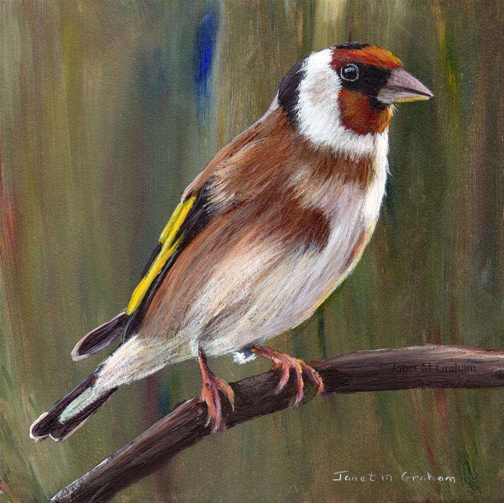 """""""European Goldfinch"""" original fine art by Janet Graham"""