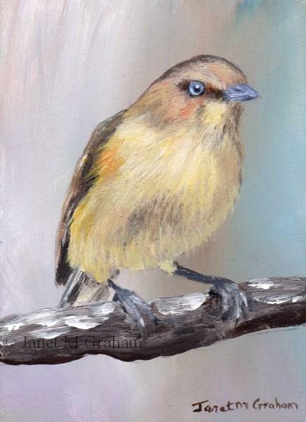 """Weebill ACEO"" original fine art by Janet Graham"