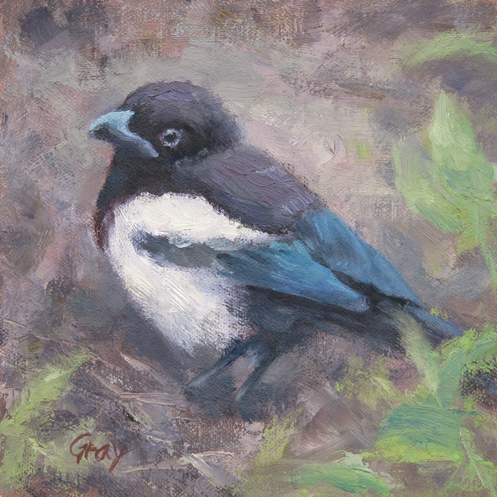 """Little Magpie"" original fine art by Naomi Gray"