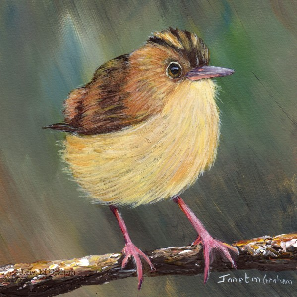"""Golden Headed Cisticola"" original fine art by Janet Graham"