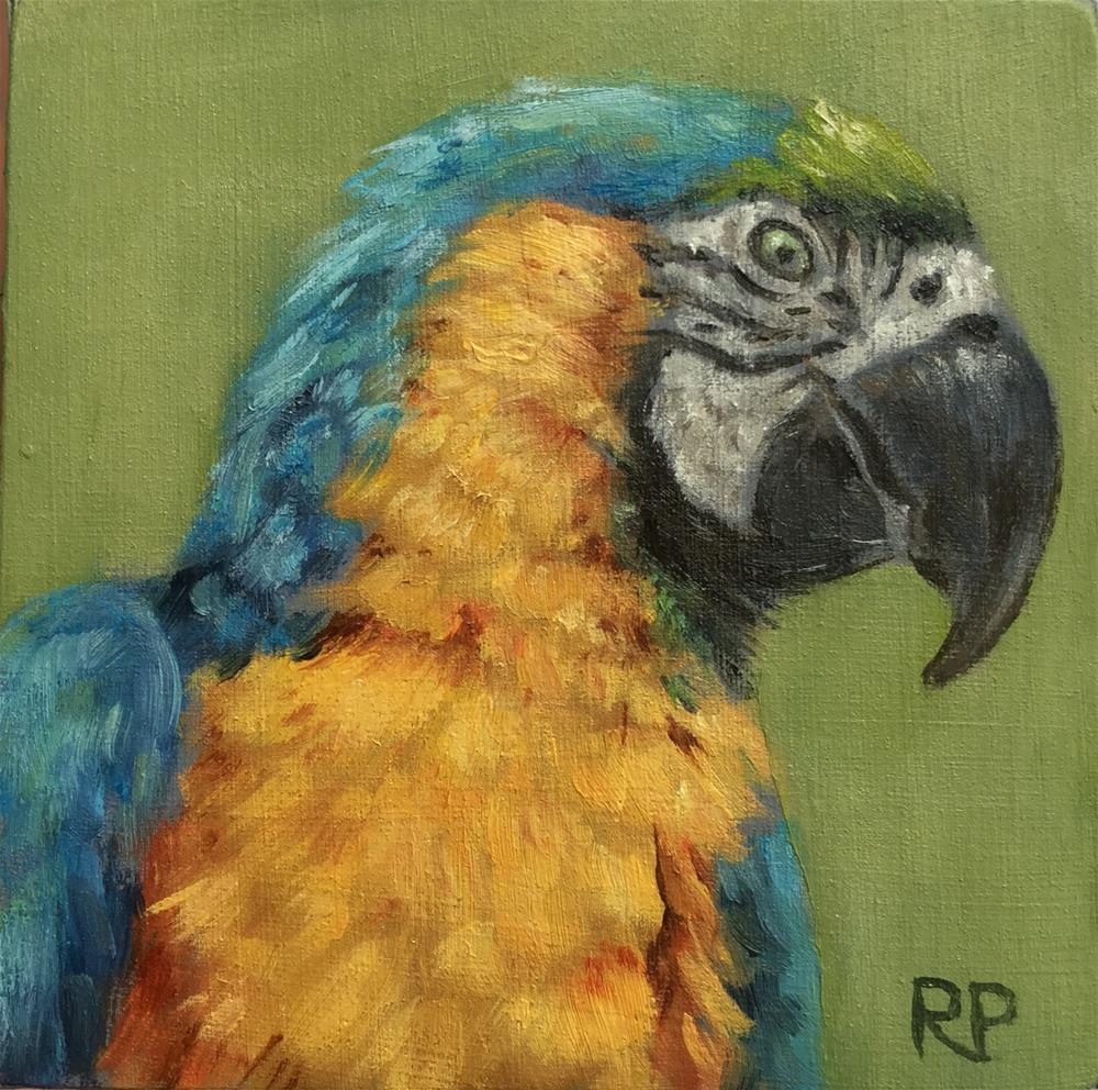 """Macaw study"" original fine art by Rhea  Groepper Pettit"