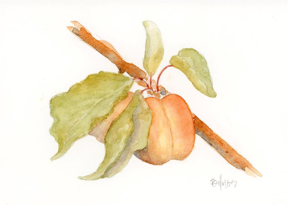 """""""Apricots II"""" original fine art by Susanne Billings"""