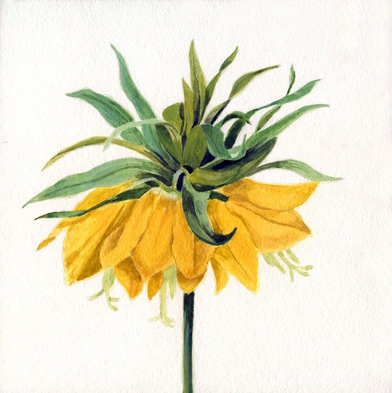 """Crown Imperial flower"" original fine art by Ria Hills"