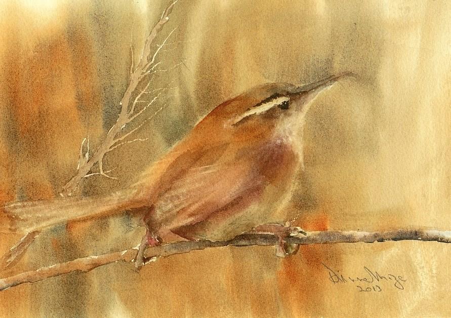 """""""Third Wren Study"""" original fine art by Dianne Mize"""