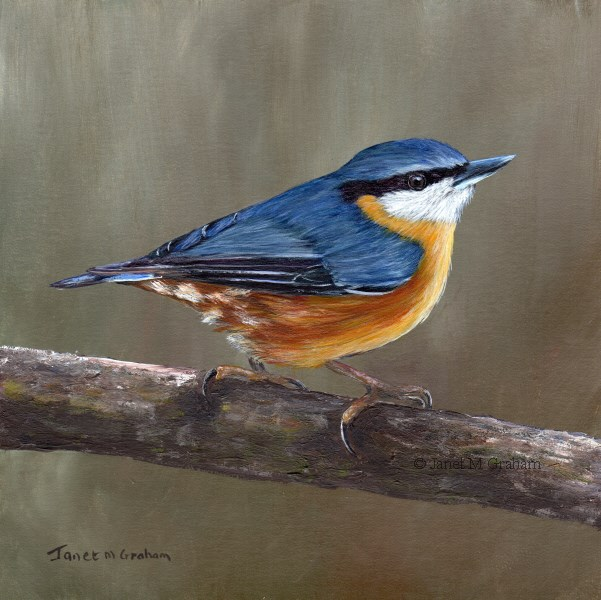 """Nuthatch No 3"" original fine art by Janet Graham"