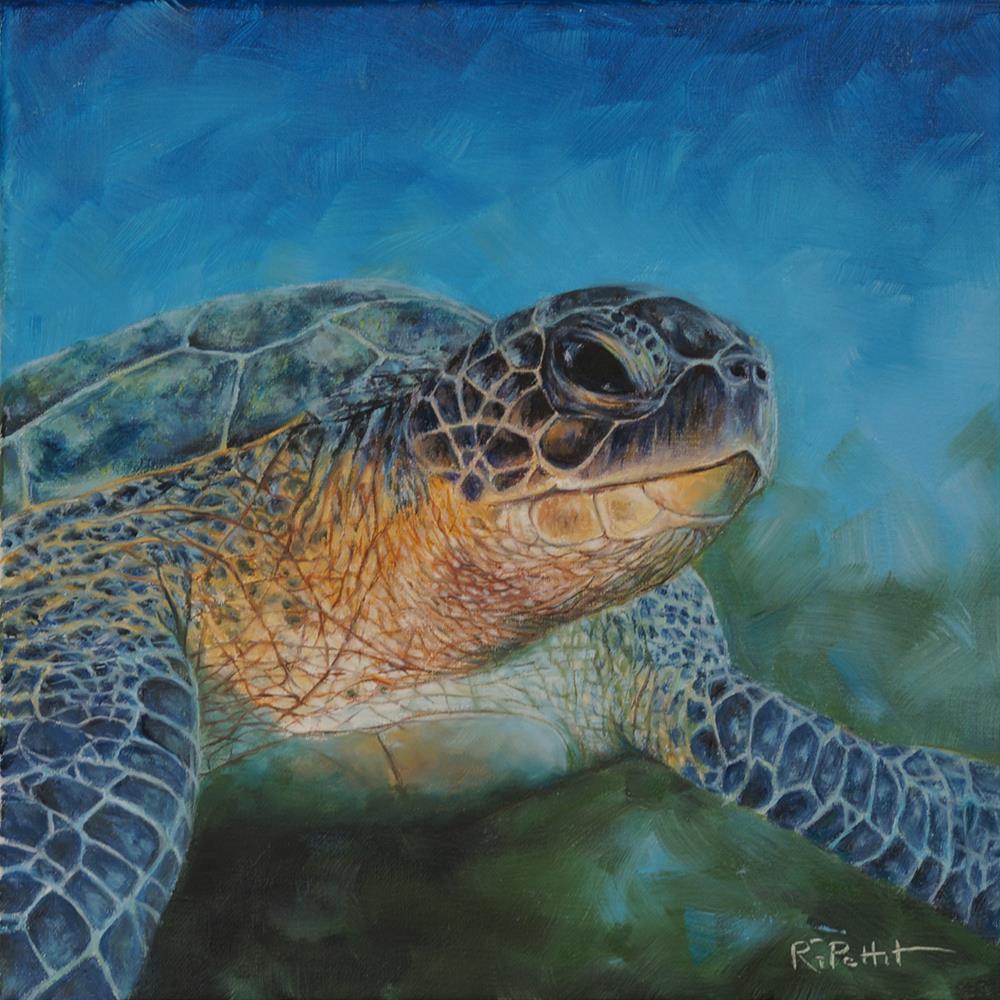 """""""Sea Turtle"""" original fine art by Rhea  Groepper Pettit"""