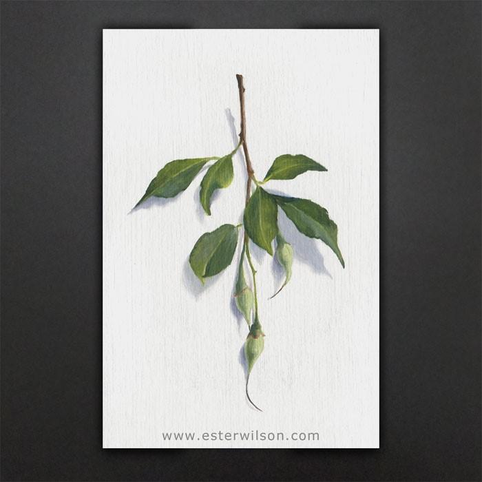 """Seed Pods"" original fine art by Ester Wilson"
